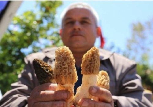 Antalya'da altın değerinde: Vatandaşın geçim kaynağı oldu...